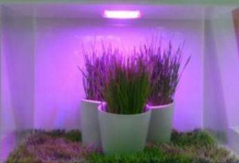 植物照明市场火热 巨头纷纷加码布局同江